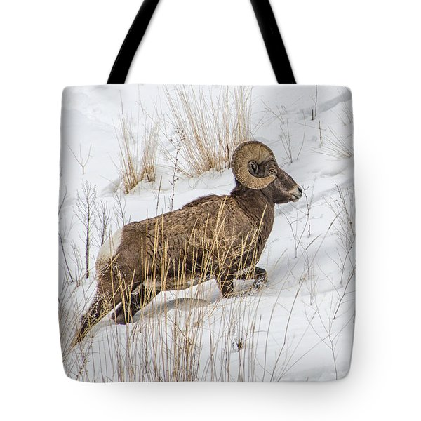 Bighorn In Yellowstone Tote Bag