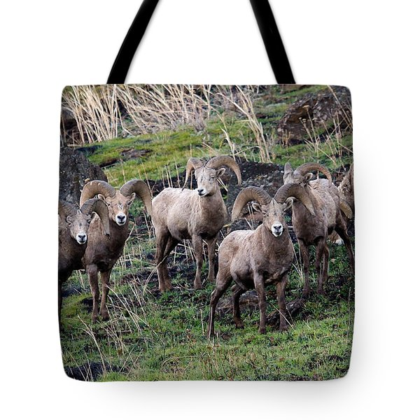 Tote Bag featuring the photograph Bighorn Reunion by Steve McKinzie