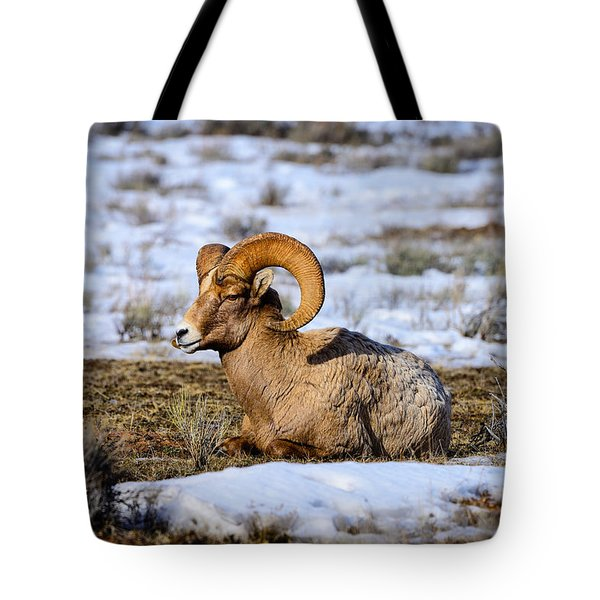 Tote Bag featuring the photograph Bighorn Sheep by Greg Norrell