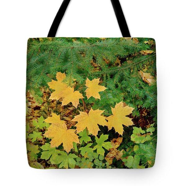 Bigleaf Maple Leaves And Douglas Fir Tote Bag