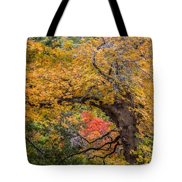 Bigtooth Maples Turning Colors Tote Bag