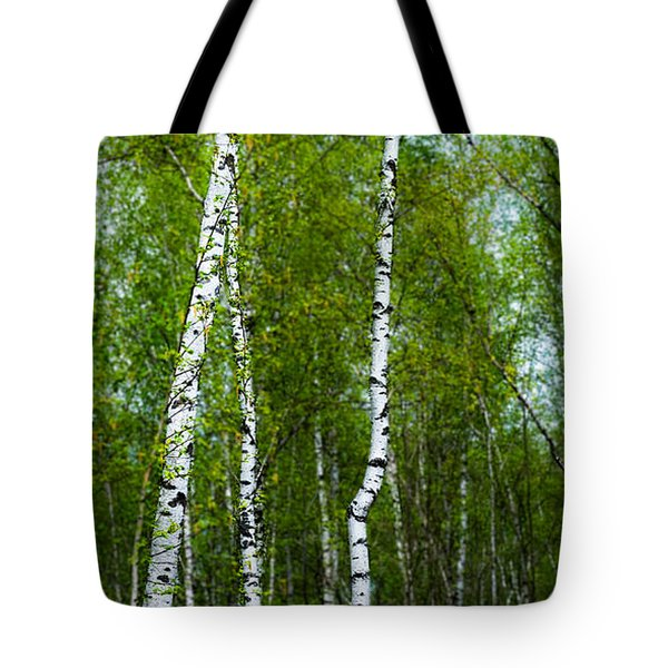 Birch Forest Tote Bag by Hannes Cmarits