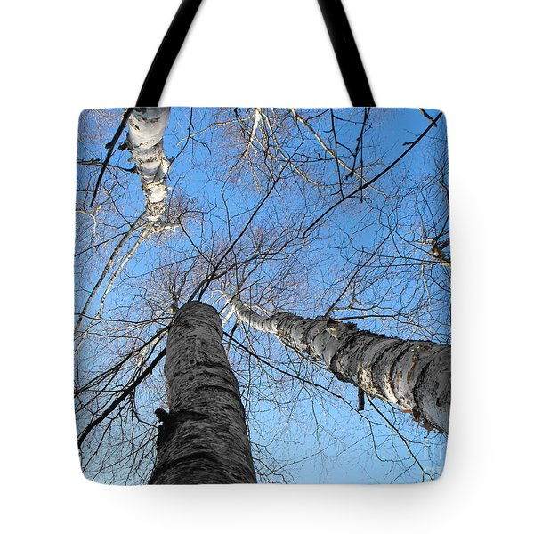 Birch Group In Winter Tote Bag