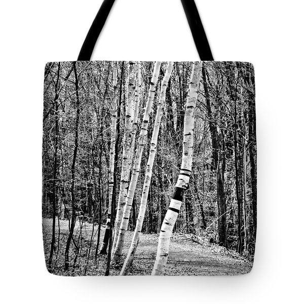Tote Bag featuring the photograph Birch Sentinels by Kristen Fox