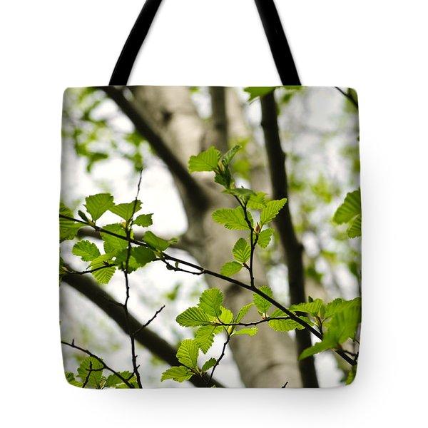 Birch Tree In Spring Tote Bag by Elena Elisseeva