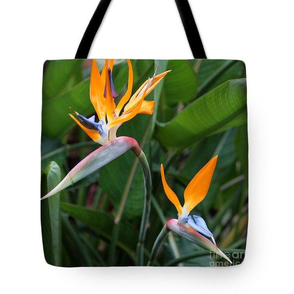Bird Of Paradise Tote Bag by Carol Groenen