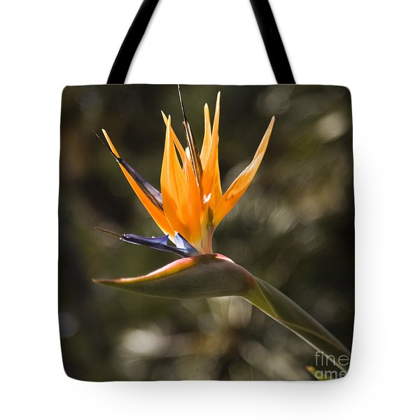 Bird Of Paradise Tote Bag by David Millenheft