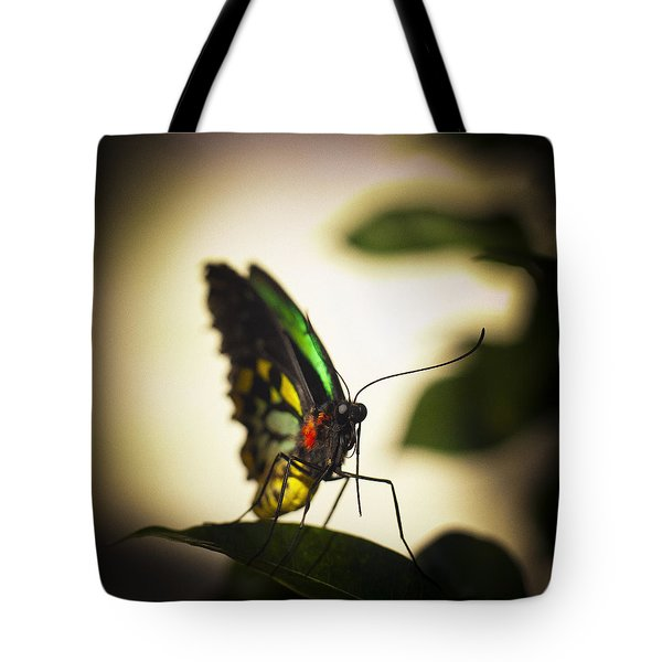Birdwing Butterfly Tote Bag by Bradley R Youngberg