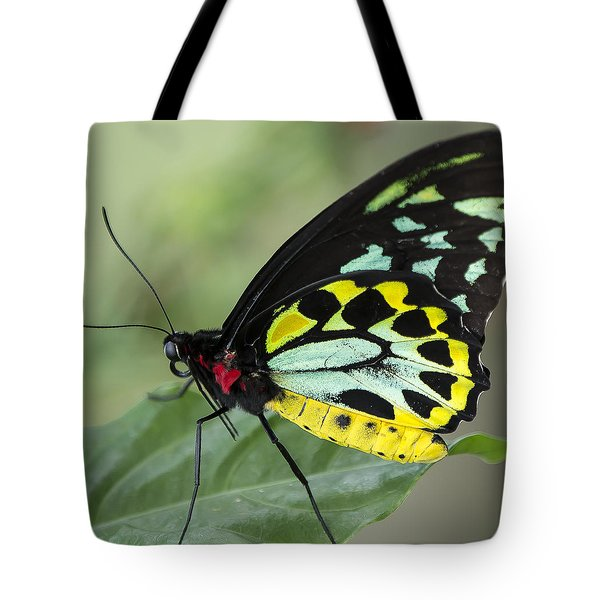 Birdwing Butterfly Tote Bag