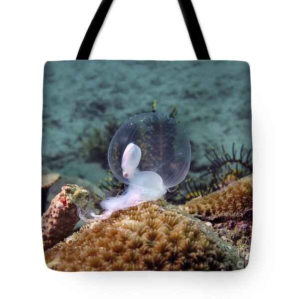Tote Bag featuring the photograph Birth Of Marine Cuttlefish by Sergey Lukashin