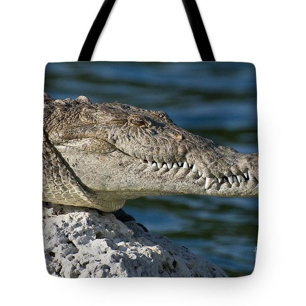 Tote Bag featuring the photograph Biscayne National Park Florida American Crocodile by Paul Fearn