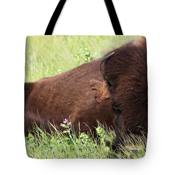 Bison Nap Tote Bag by Alyce Taylor