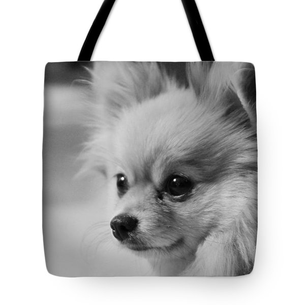 Black And White Portrait Of Pixie The Pomeranian Tote Bag
