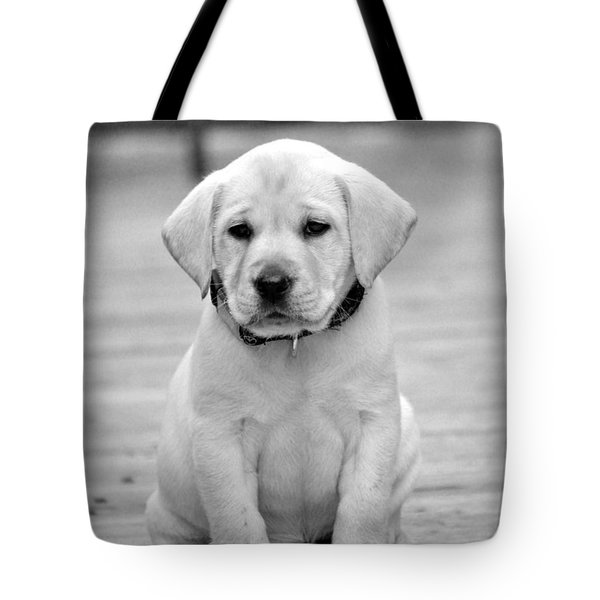 Black And White Puppy Tote Bag