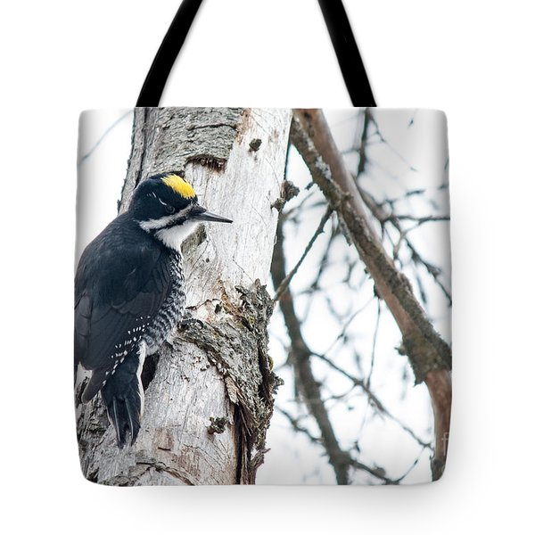 Black-backed Woodpecker Tote Bag