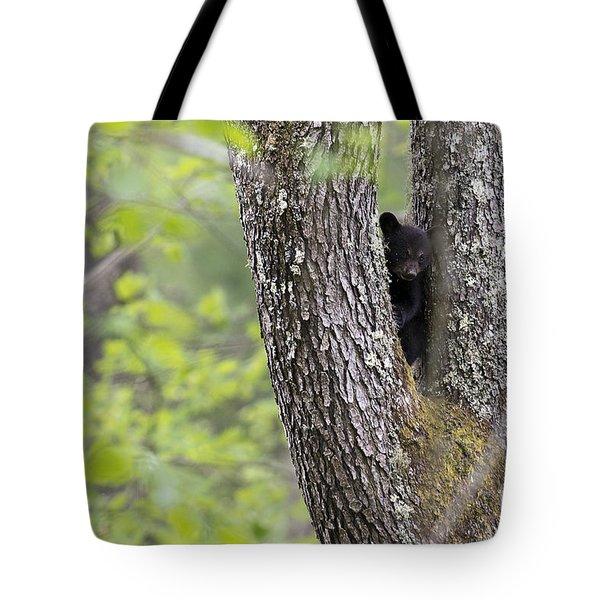 Black Bear Cub In Fork Of Tree Tote Bag by Dan Friend