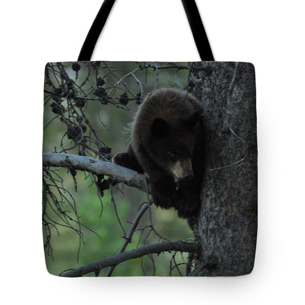 Black Bear Cub In Tree Tote Bag