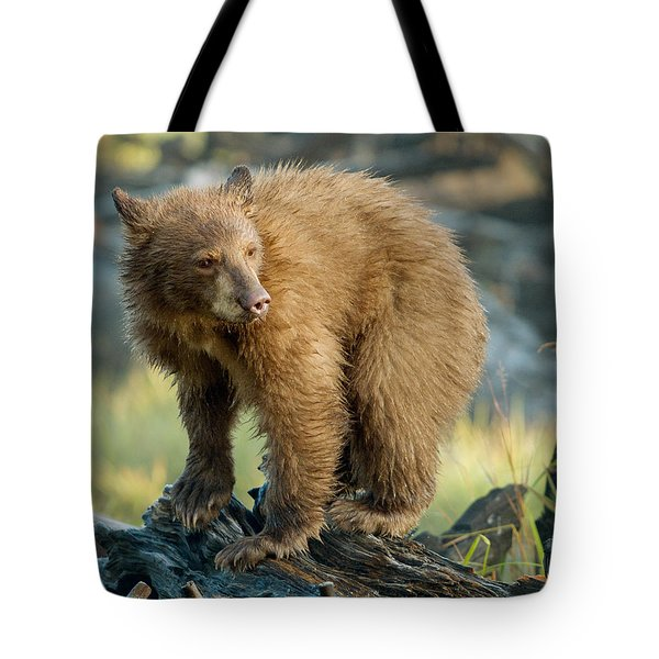 Tote Bag featuring the photograph Black Bear by Doug Herr