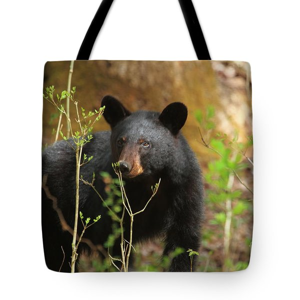 Tote Bag featuring the photograph Black Bear by Geraldine DeBoer