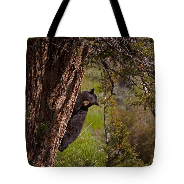 Tote Bag featuring the photograph Black Bear In A Tree by J L Woody Wooden