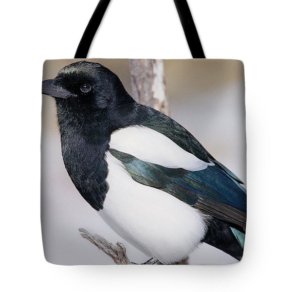 Black-billed Magpie Tote Bag by Eric Glaser