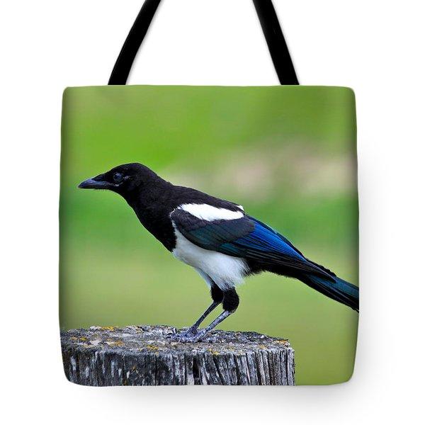 Black Billed Magpie Tote Bag