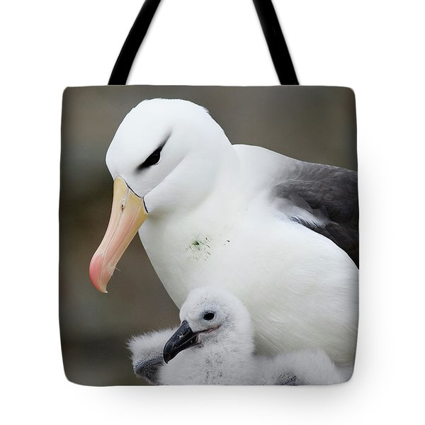 Black-browed Albatross And Chick Tote Bag by Suzi Eszterhas