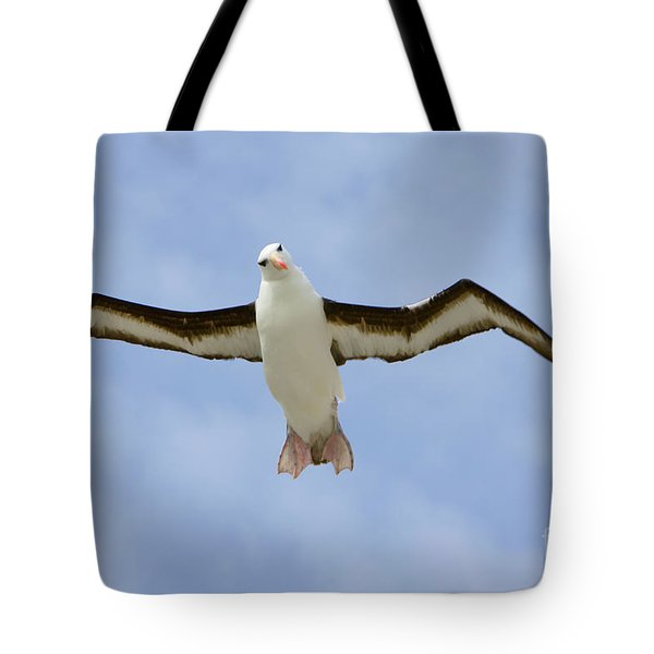 Black-browed Albatross Flying Tote Bag by Yva Momatiuk John Eastcott