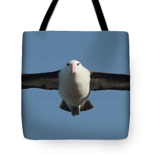 Black-browed Albatross Thalassarche Tote Bag by Panoramic Images