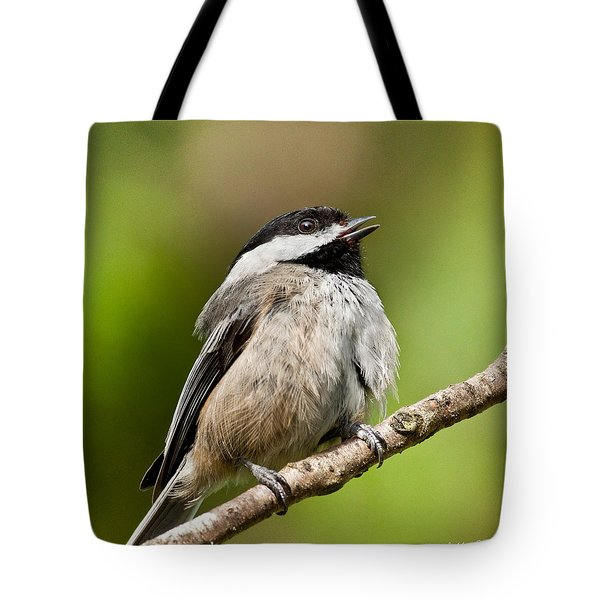 Black Capped Chickadee Singing Tote Bag