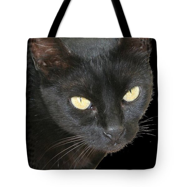 Black Cat Isolated On Black Background Tote Bag by Tracey Harrington-Simpson
