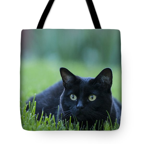 Black Cat Tote Bag by Juli Scalzi