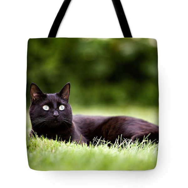 Black Cat Lying In Garden Tote Bag