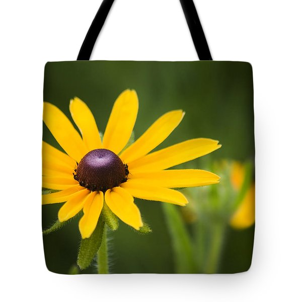 Black Eyed Susan Tote Bag by Adam Romanowicz