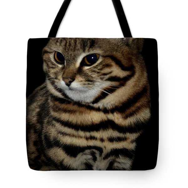 Black-footed Cat Tote Bag by Maria Urso