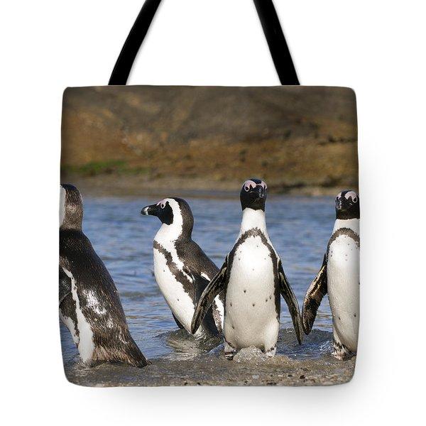Black-footed Penguins On Beach Cape Tote Bag by Alexander Koenders