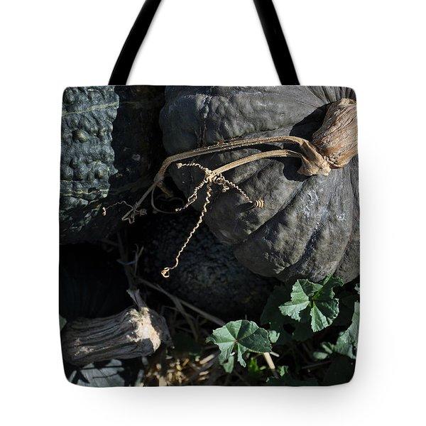 Black Pumpkins Tote Bag by Minnie Lippiatt