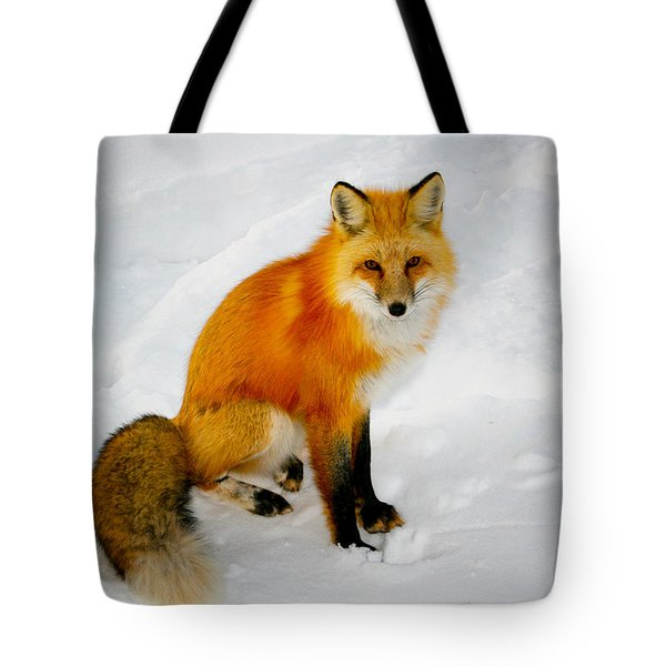 Black Socks Fox Tote Bag