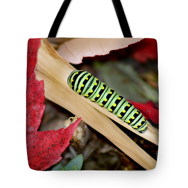 Black Swallowtail Butterfly Caterpillar Tote Bag