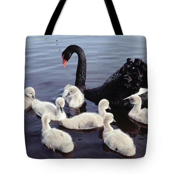 Black Swan And Cygnets Tote Bag