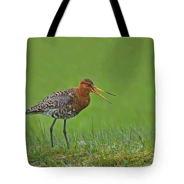 Black-tailed Godwit Tote Bag by Tony Beck