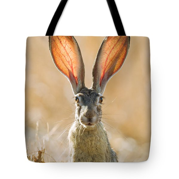Black-tailed Hare Davis California Tote Bag by Doug Herr
