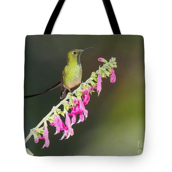 Black-tailed Train-bearer Hummingbird Tote Bag by Dan Suzio