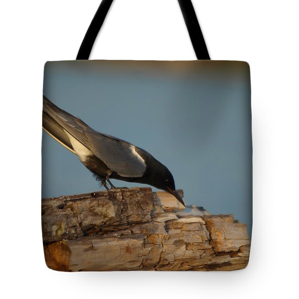 Tote Bag featuring the photograph Black Tern Fishing by James Peterson
