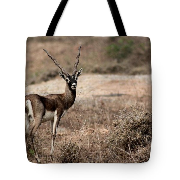 Blackbuck - Antelope Tote Bag