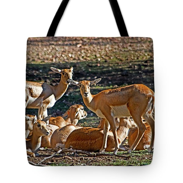 Blackbuck Female And Fawns Tote Bag