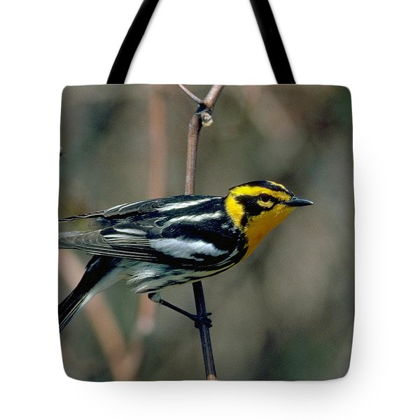 Blackburnian Warbler Tote Bag by Doug Herr
