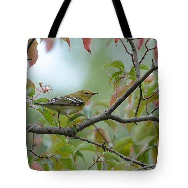 Blackpoll Warbler In The Fall Tote Bag