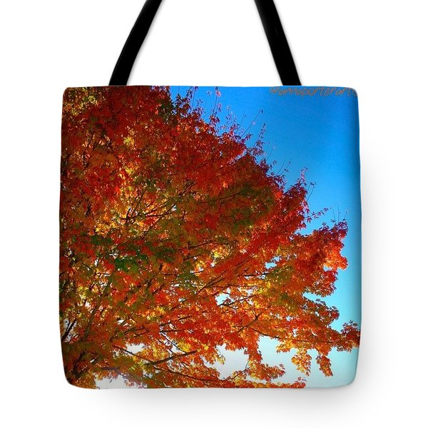 Blazing Orange Maple Tree Tote Bag