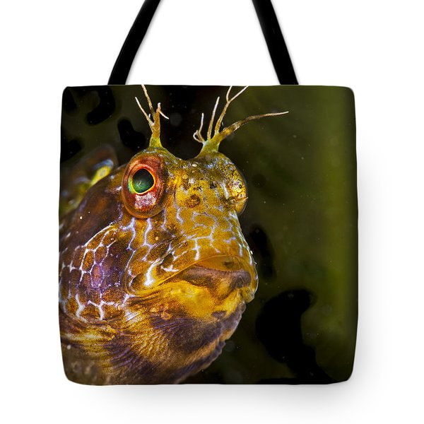 Blenny In Deep Thought Tote Bag